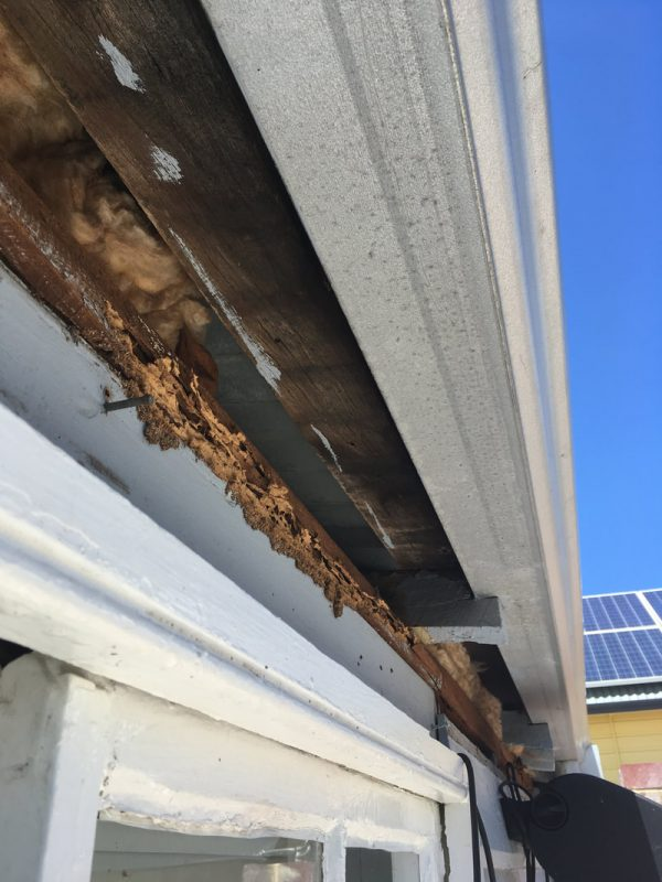 Termites in roof eaves (major structural damage)
